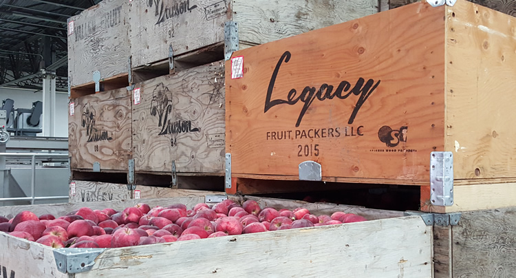 legacy-fruit-packing-line