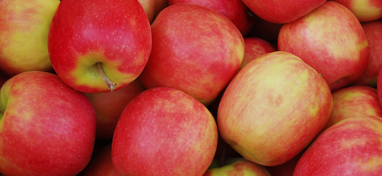 banner-pink-lady-apple-supplier