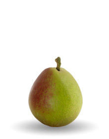 seckel-pear