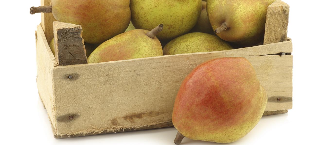 comice-pear-supplier