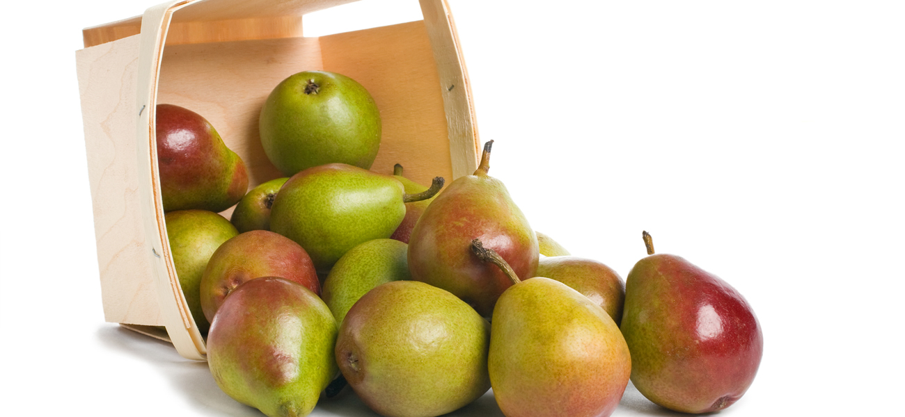 seckel-pear-supplier