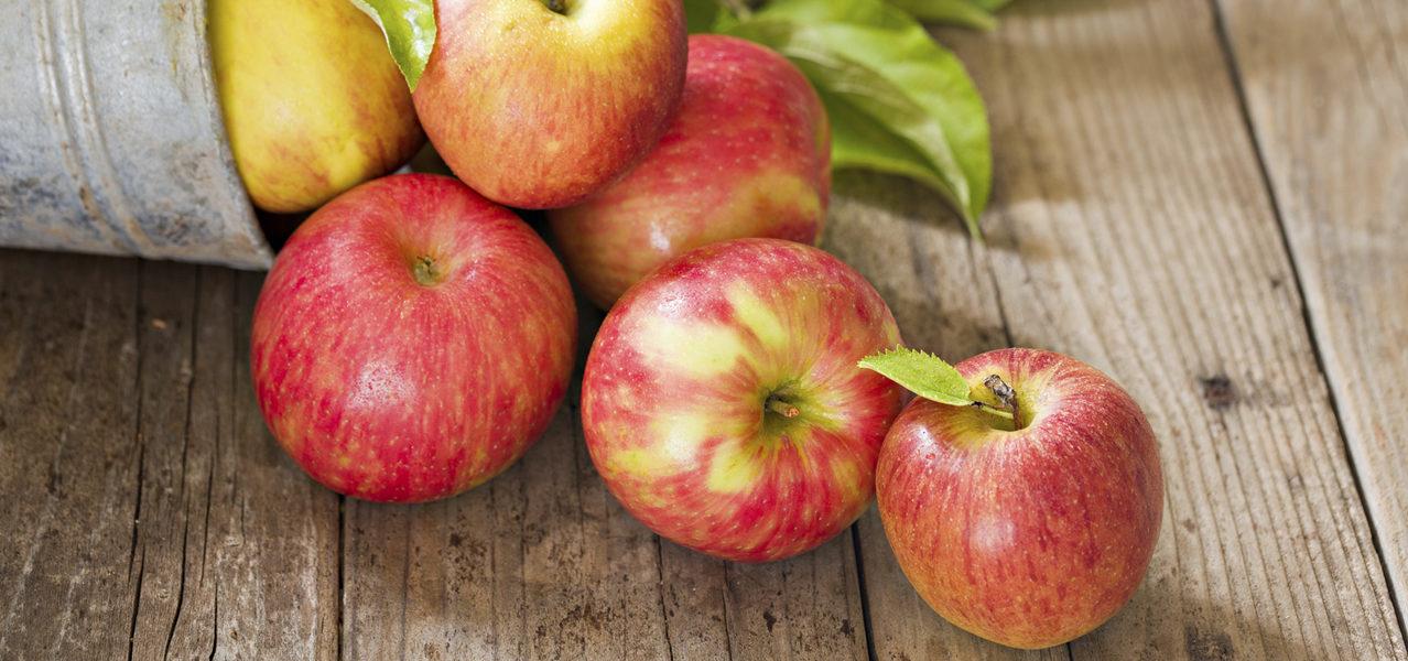 apple-grower